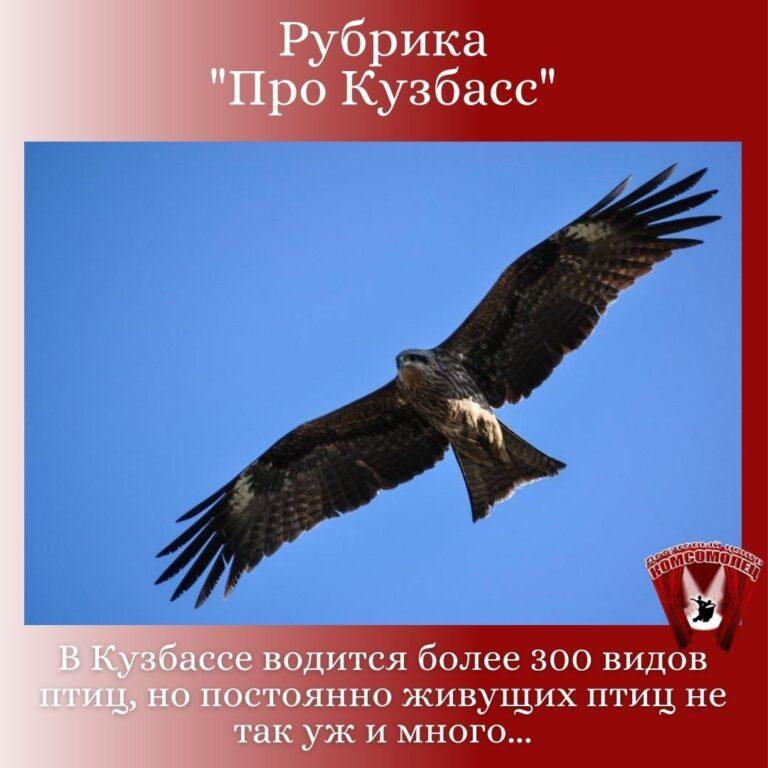 Онлайн рубрика «Про Кузбасс»/ «Птицы Кузбасса»