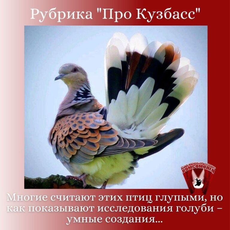 Онлайн рубрика «Про Кузбасс» / Птицы Кузбасса. Голубь.